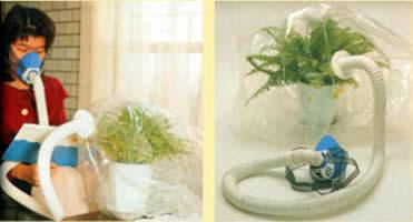 Fotosintesis menghasilkan O2. Manusia bernapas menghirup O2. Yang paling seger ya yang baru dihasilkan oleh tanaman.