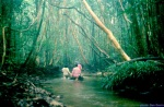 Hutan rawa gambut di Kalimantan